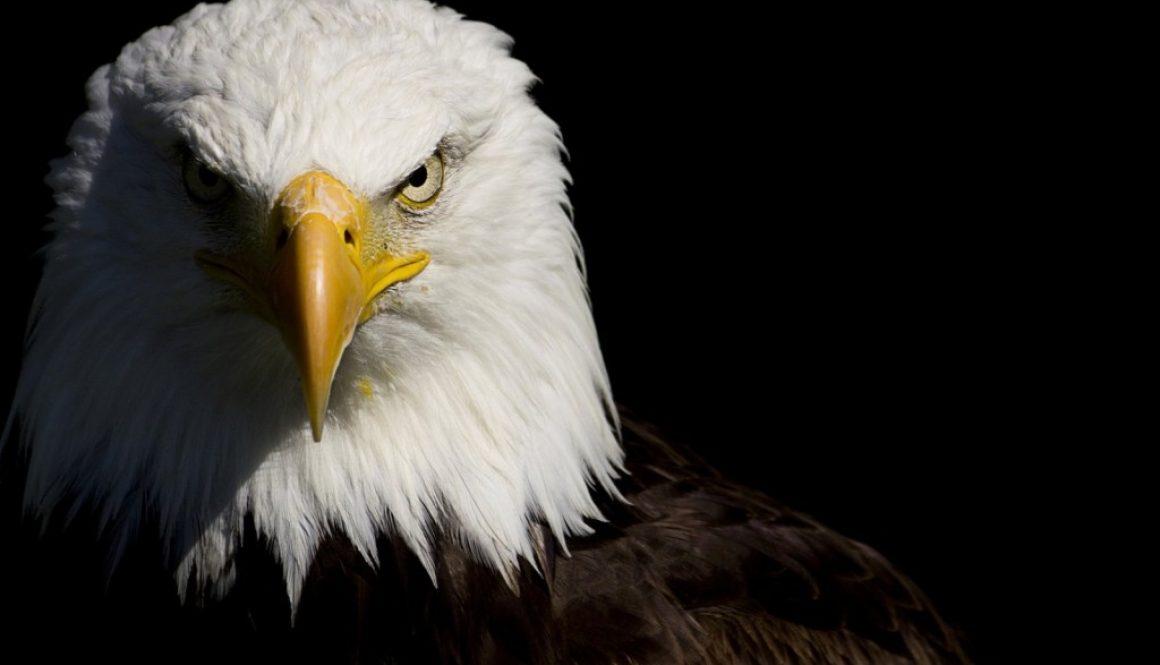 cabeca-aguia