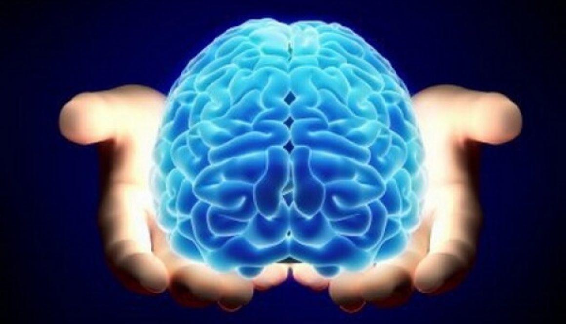 o cerebro